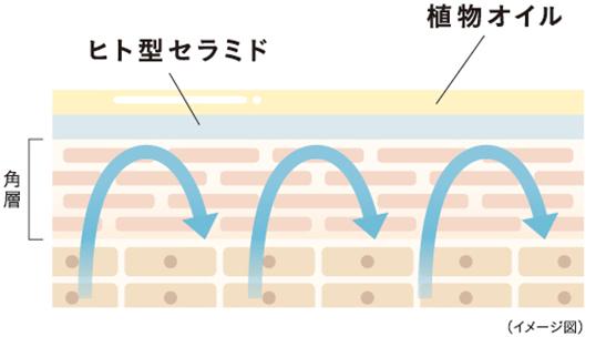 植物オイルが肌表面を覆いうるおいを閉じ込める イメージ図